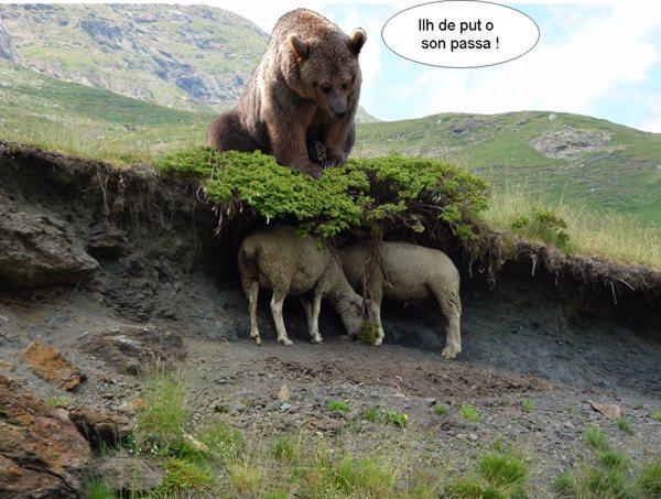 Extrêmement Histoire d'ours QJ83